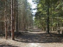 Rendlesham skog i våren - Suffolk Arkivfoton