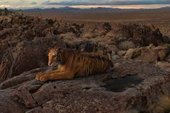 rendu 3d de grand tigre sur un repos de roche illustration libre de droits