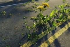 rendu 3d des pissenlits jaunes grandissant sur la route de dommages illustration de vecteur