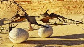 Rendu d'oeufs et de ptérodactyle 3d Images libres de droits