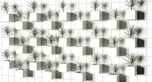 rendu 3d Succulents sur le mur Photographie stock libre de droits