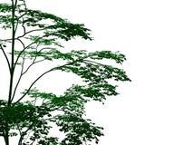 rendu 3d d'un arbre noir décrit avec les bords verts d'isolement Photos libres de droits