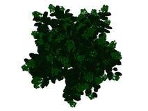 rendu 3d d'un arbre noir décrit avec les bords verts d'isolement Photographie stock libre de droits