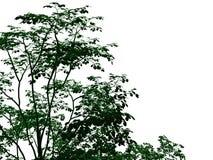 rendu 3d d'un arbre noir décrit avec les bords verts d'isolement Photo stock
