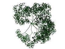 rendu 3d d'un arbre noir décrit avec les bords verts d'isolement Image libre de droits
