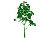 rendu 3d d'un arbre noir décrit avec les bords verts d'isolement Images libres de droits