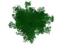 rendu 3d d'un arbre noir décrit avec les bords verts d'isolement Images stock