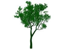 rendu 3d d'un arbre noir décrit avec les bords verts d'isolement Image stock