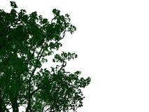 rendu 3d d'un arbre noir décrit avec les bords verts d'isolement Photos stock