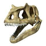 Rendu de 3 D d'un crâne d'Allosaurus. Photo libre de droits