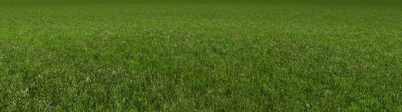 Rendu de l'herbe 3d Photos libres de droits