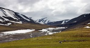 Rene in der Tundra in Svalbard Stockfotos