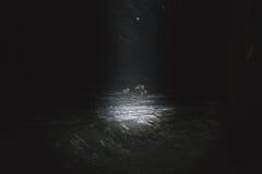 Rene nachts im Frostwetter beim Schneien Stockfotos