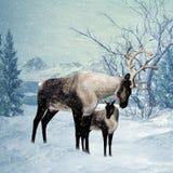 Renen och lismar vinterhälsningskortet Royaltyfri Fotografi