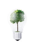 Renewable energy. Light bulb and green tree growing from it isolated on white. Renewable energy and ecology concept Royalty Free Stock Image