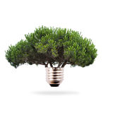 Renewable energy. Tree bulb, concept of clean and renewable energy Stock Images