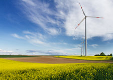 Renewable energy. Canola fields and Windmills royalty free stock images