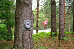 Renewable Energy. An electric meter on a tree - the measurement of power from a renewable resource Royalty Free Stock Image