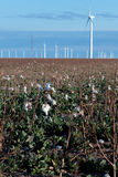 Renewable energy - cotton fields with wind turbines Royalty Free Stock Images