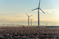 Renewable energy - wind turbines with cotton fields in the foreg Royalty Free Stock Photo