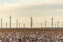 Renewable energy - wind turbines with cotton fields in the foreg Stock Image