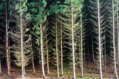 Renewable resource forest Stock Photography