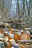 Renewable resources Stock Photo