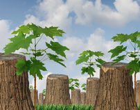 Renewable Resources. As a concept for sustainable forest management with a group of cut down old trees and new green saplings growing between the wooden stumps vector illustration
