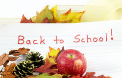 Renewed Gift of Learning. Back to School written on primary school paper surrounded by autumn leaves, red apple, pine cones, and addition of gold ribbon to Stock Image