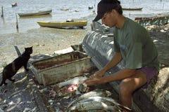 Rengörande fisk av en fiskare Arkivfoton