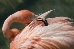 Rengörande fjädrar Arkivfoto