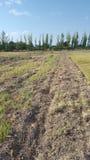 Rengöring för fält för landmendozaarbete Royaltyfri Fotografi