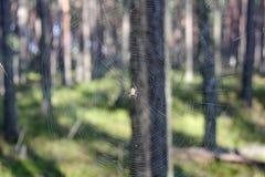 Rengöringsduk och spindelnärbild i solljus på den suddiga bakgrunden av skogen Arkivfoto