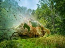 Rengöringsduk på träd i skog arkivbild