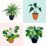 Rengöringsdukhuset planterar samlingen med fyra tropiska växter Royaltyfria Bilder
