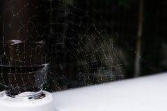 Rengöringsdukspindeln förtjänar med regndroppar Royaltyfria Foton
