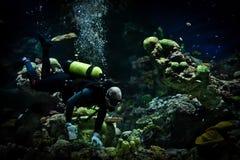 Rengöringsmedel för fiskbehållare Fotografering för Bildbyråer
