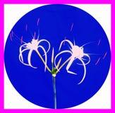 Renhet av blommor royaltyfria foton