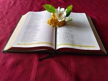 Renhet av gudordet Arkivbild