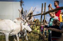 Renifer w Rosyjskim zoo Obrazy Stock
