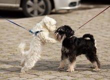 Reniflement de chiens Photo libre de droits