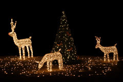 Renna con l'albero di Natale Fotografia Stock Libera da Diritti