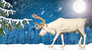 Renna del ` s di Santa Claus che cammina sulla neve nella notte di luce della luna Immagine Stock