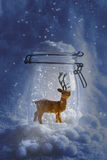 Renna Snowglobe Fotografia Stock