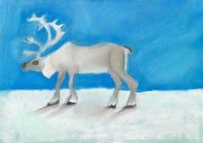 Renna su neve sotto il cielo blu scuro Immagine Stock Libera da Diritti