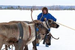 Renne d'homme de Nenets avec un traîneau de renne Images libres de droits