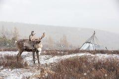Renne devant un yurt dans une tempête de neige Images stock