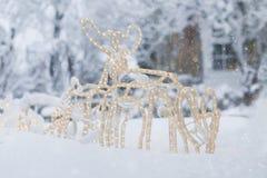 Renne Sleigh dans la neige Photographie stock libre de droits