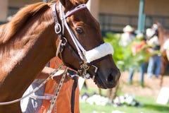 Rennen-Pferd Stockbild