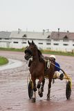 Rennend paardvervoer royalty-vrije stock foto's